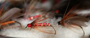 Red hackle small